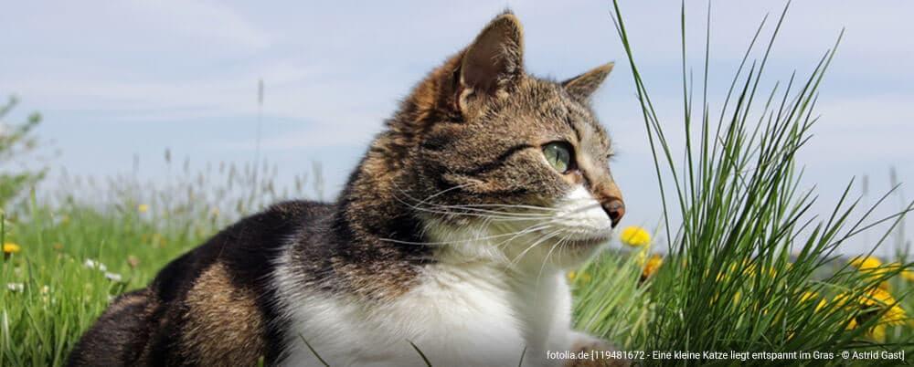 Homöopathie Für Katzen 11 Selbst Behandelbare Beschwerden